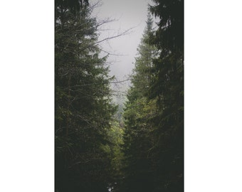 Forest Digital Photo - Evergreen Forest - Forest Photo - Vertical Photo - Digital Photo - Digital Download - Instant Download - Wall Art