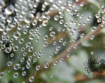 Dew drops Photograph, Spiderweb Photograph,  4 x 6