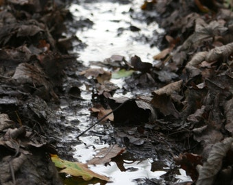 Puddle Through Leaves Photograph