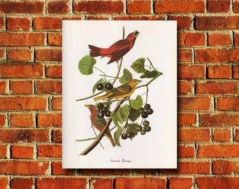Audubon Summer Tanager Poster - #0570