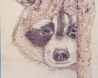 """Wood burned raccoon """"Shy"""""""