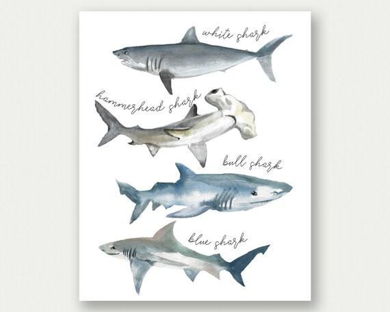 Shark Poster Shark Print Shark Species Watercolor Sharks
