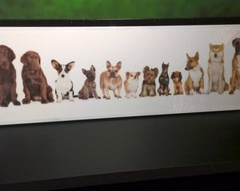 41x13 Glazed Dogs portrait !