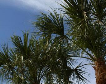 Palm Tree Photography, Fine Art Photography, Nature Photography, Summer Wall Art, Living Room Decor, Beach House Decor, Florida Palm Trees