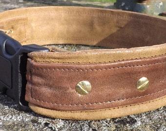Wide dog collar shiny copper