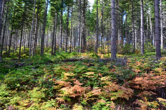 High altitude forest in the fall