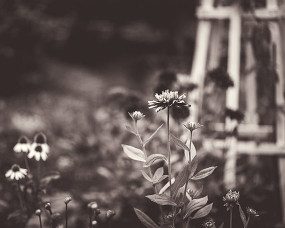 Flower Garden Photograph - Black White Photography - Fine Art Print - Home Wall Decor - Flowers - Floral Pictures - House Warming Gifts
