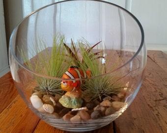 Nemo Open top terrarium