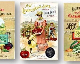 Livingston Seeds Vegetables Catalogue Vintage Seed Garden Manual Set of 3 Art Prints