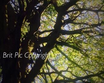 Gawthorpe Summer Trees