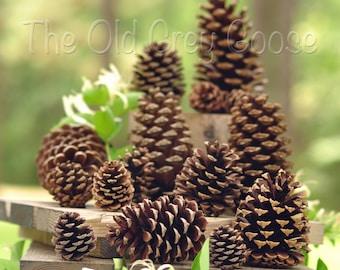 "20 Pine Cones | 4"" - 5"" Natural Pine Cones"
