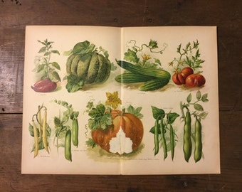 Illustration of Vegetables from 1889 German Book