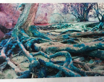 Photograph of Woodland TREES/ROOTS. Appearance of velvet/fabric