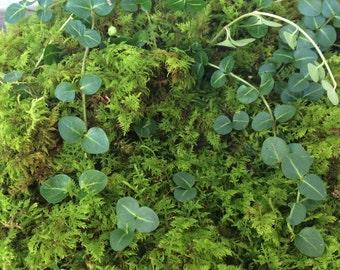 Moss, Fern Moss and Partridge Berry Vine, Terrariums, Fairy Garden, Floral Design, Ground Cover, Native Plants, Woodland Wedding Decor, Gift