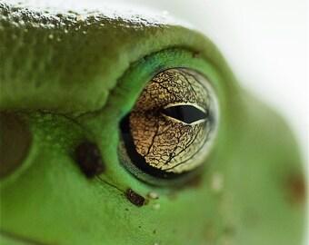 Frog print green tree eye photography macro fine art abstract print square