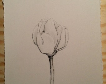 Magnolia Bloom - pencil - budding
