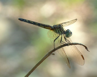 Dragonfly Series #1