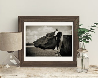 Black and white photograph, country living decor, wall art, rustic, cow in a field,  Fixer Upper Home Decorations