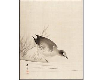 Bird Ink Drawing Print - Bird Digital Print - Japanese Minimalist - Sumi-e - Vintage Japanese Art - Digital Download - Kawabata Gyokusho