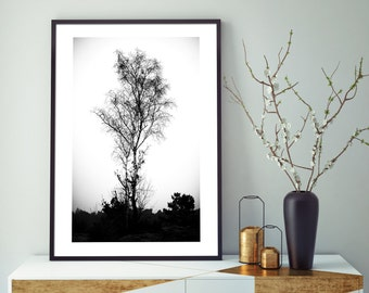 Photograph, tree in winter, landscape in winter, fine art print, black and white photo, art and collections