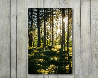 Large Forest Canvas, Forest Nature Photography, Evening in Woodland Prints Large Canvas Wall Art Prints, Forest Wall Decor