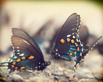 Butterfly Print, Fine Art Photography, Nature Photography, Blue Butterfly