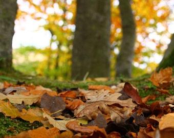 Leaves, Leaves