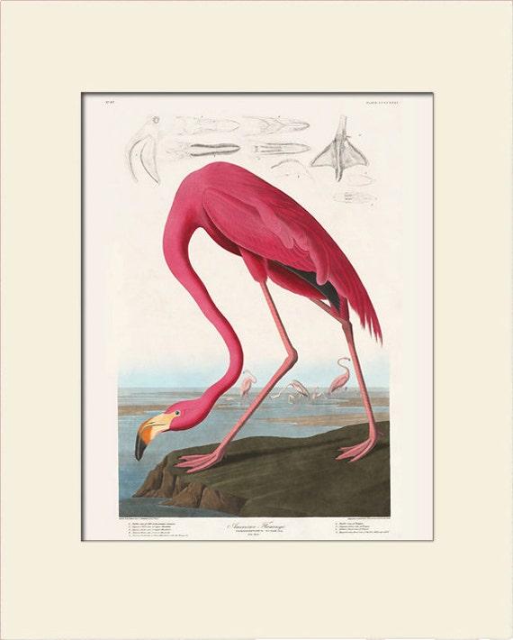 Audubon Bird Art Print, American Pink Flamingo, New Matted Art Print, Wall Decor, Natural History, Vintage Bird Illustration, Wall Art