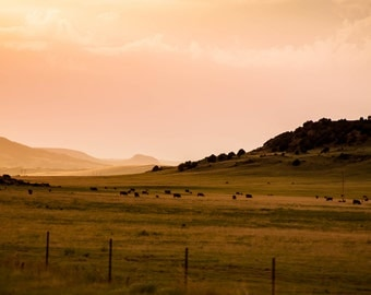 Scene From the Road II: WALL ART Fine Art Photography Color Landscape New Mexico Cattle Sunset Dramatic Light Sky Purple Yellow Rain