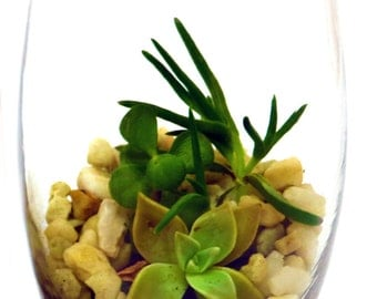 DIY Terrarium Kit, Oblong Glass Succulent Terrarium Kit, Miniature Garden, Living Succulent, Green Gift, Indoor Plant, Terrarium Garden DIY