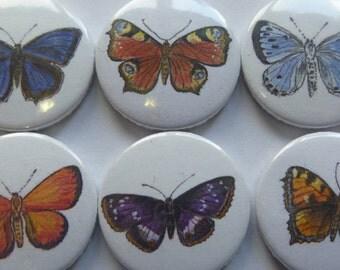 Magnets butterflies