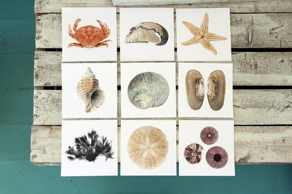 SEASHELL POSTCARDS, choice of 9 cards