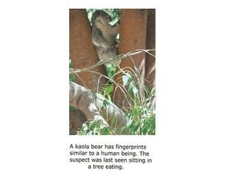 Kaola Bear - Suspect