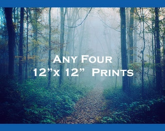 Discount Print Set - Save 15% on Four Prints, 12x12 - Fits IKEA Ribba Frames - Fairytale Photos - Colorful Photography - Trees Collection