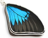 Papilio Ulysses Real Butterfly Wing Necklace. Butterfly Pendant. Real insect jewelry. Black and blue butterfly.