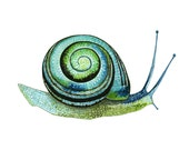 Snail Blue Green Shell Watercolor Illustration Print