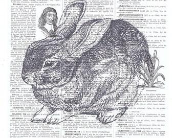 Art print.Rabbit,bunny,repurpose book page,buy 3 get 1 free,paper ephemera,french, paris,animal,nature,affordable art.mom.bunnie.dad.nursery