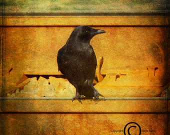 Gold Green Crow Train Tracks Photograph--Trainspotting Crow 2--Fine Art