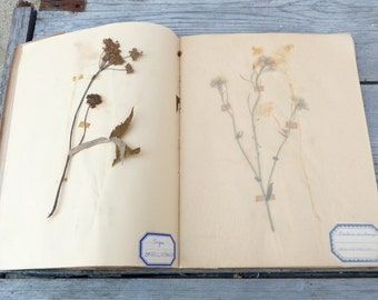 Vintage Antique  French herbarium pressed plant album / botanical / Set of 27 herbariums