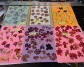 Choose your Real Pressed Flowers Grown in Alaska 317 FL