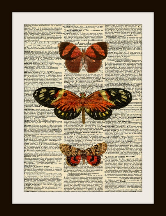 Butterfly Moth Study in RED ORANGE Art Print on Gold Gilded Vintage Dictionary Page LARGE 8x10