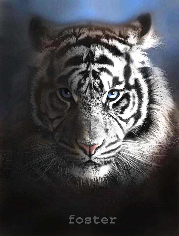 tiger art tiger print tiger painting white tiger art by
