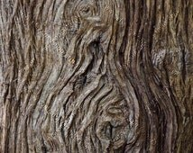 Digital Download Photo of Real Gnarled Swirly Brown Tree Bark Wood Knots Texture, Nature Texture Pattern Photo, Rustic Background Image