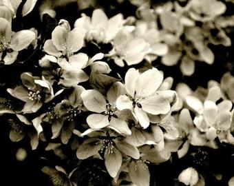 Black White Photography, Floral Art Print, Cherry Blossoms