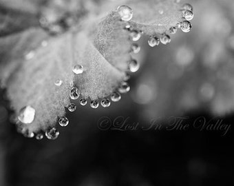 Rain Photograph, Summer Garden Photo, Nature Photography, Leaf Picture, Water Droplets, Fine Art Print, Wall Decor, Macro Image, Grey