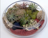 AIR PLANT TERRARIUM Kit- 10 inch wide and 3 inches high glass bowl terrarium - includes everything you see here