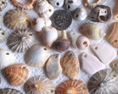 60 Sea Shell Charms and Connectors Drilled 2mm holes Jewellery Supplies (1745)