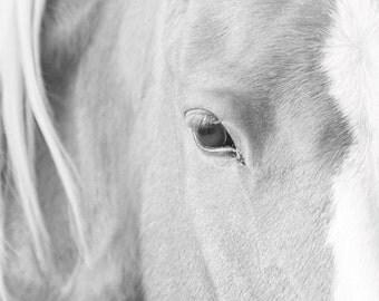 Horse Eye Fine Art Print - 11x14 Black and White Horse Photography Print