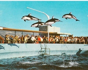 Vintage California Postcard - High-Flying Dolphins at Marineland of the Pacific (Unused)