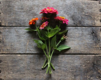 Zinnia Mixture, organic heirloom seeds, flower seeds from our farm, organic garden, flowers for the cottage garden, gardener